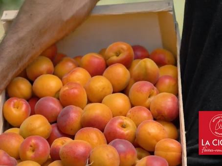 En juin régalez-vous avec l'abricot !