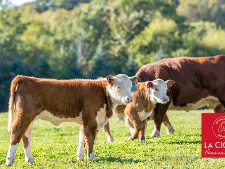 La Cigale soutient le Projet Alimentaire Territorial d'éco-pâturage à Bouillargues