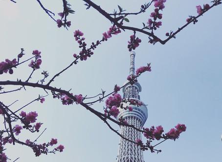 【報告】平日1day集中創業セミナー@墨田区、葛飾区