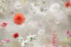 Misty Poppy.jpg