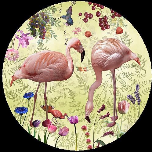 Cirkel Audubon  meerdere kleuren