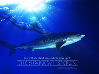 """""""Shark Whisperer"""" the first movie ever to show sharks in a positive light."""