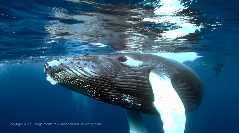 Tom&Whale