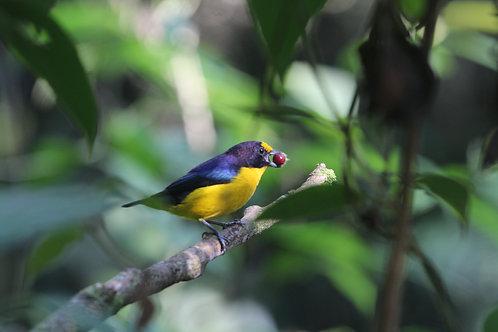 Observação de Aves Parque Municipal Costeira de Zimbros