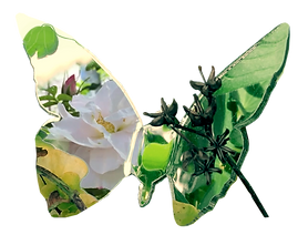 2019-02-26 08.57.55.3_Floral Motifs_Roses_Foliage_Butterfly_Photography by Anastasia V. Silva_The New Romantic Renaissance (by AVS)