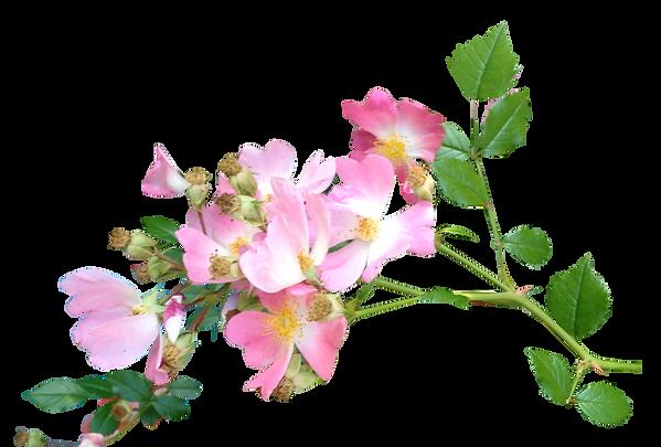 3590 (1)_Wild Primrose Vine_Jewelry Boxes_Boites de Bijoux_Floral Photography by Anastasia V. Silva_The New Romantic Renaissance (by AVS)