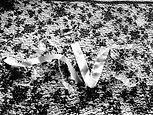 (by AVS)_Ribbon logo_Weddings_Bridal_Black gradient_Designed by Anastasia V. SIlva_The New Romantic Renaissance_(by AVS)