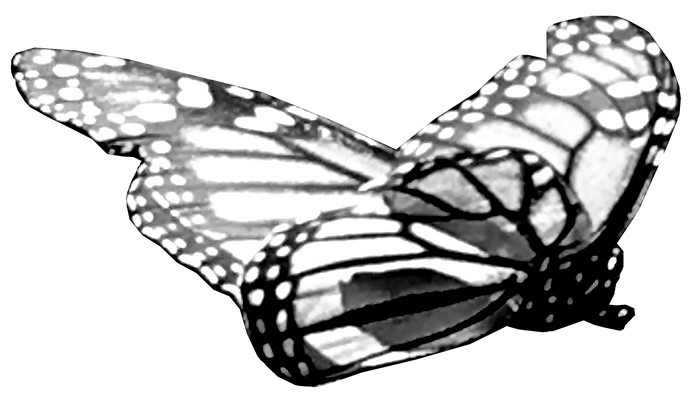 4693 (2)_Butterfly in Black+White (Connections™) by Anastasia V. Silva_The New Romantic Renaissance (by AVS)