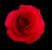 IMG_9109_1024_(14)_BRIAR_ROSE_RED_ALL_OV