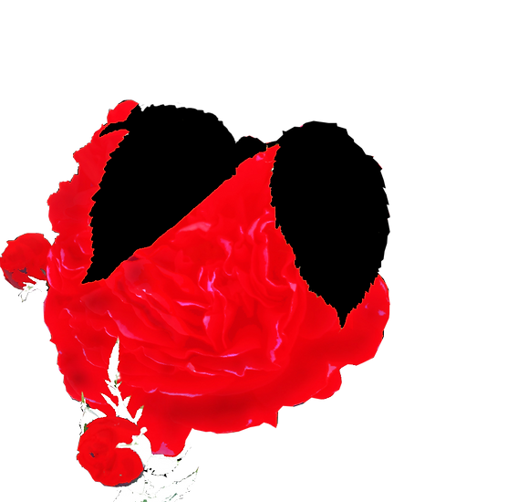 #2670_Single_Red Rose in Garden at 314 Brisdale Drive_Summer 2014_by Anastasia V. Silva_The New Romantic Renaissance (by AVS)_(2)