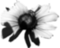 4711 (1)_Connections™ (Butterfly + Bee™)_Daisy Motif_Clip Art_by Anastasia V. Silva™_The New Romantic Renaissance™ (by AVS™)