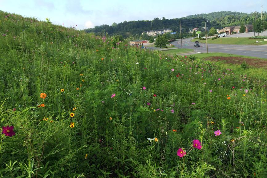 natural_wildflowers_ew.jpg