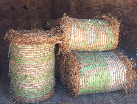 pine straw.jpg