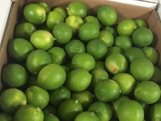 Investigadores producirán líquido que alarga el tiempo de vida de limones y mandarinas