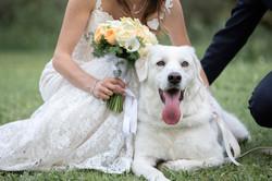 reportage-matrimonio-carlotta-e-lorenzo-