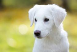 cane-bianco-servizio-fotografico-autunno-animale-domestico