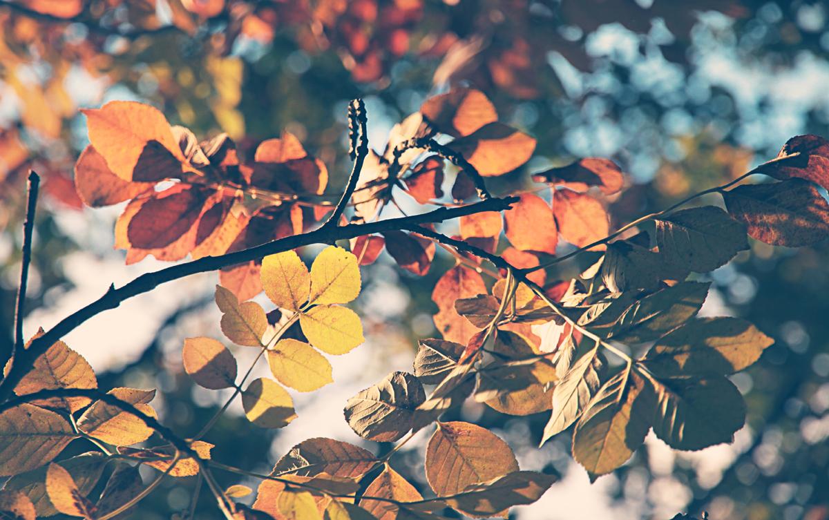 rami-e-foglie-autunnali