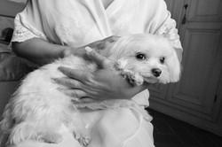 matrimonio-maura-e-giancarlo-castelfiorentino-toscana-cane