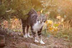 gatto-domestico-animale-servizo-fotografico