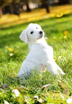 cane-bianco-servizio-fotografico-animale-domestico-colori-autunno