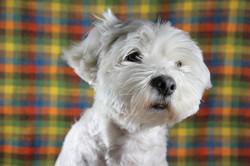 cane-bianco-servizio-fotografico-in-studio