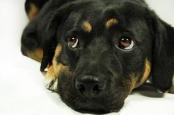 cane-servizio-fotografico-fondo-bianco-animale-domestico-ritratto