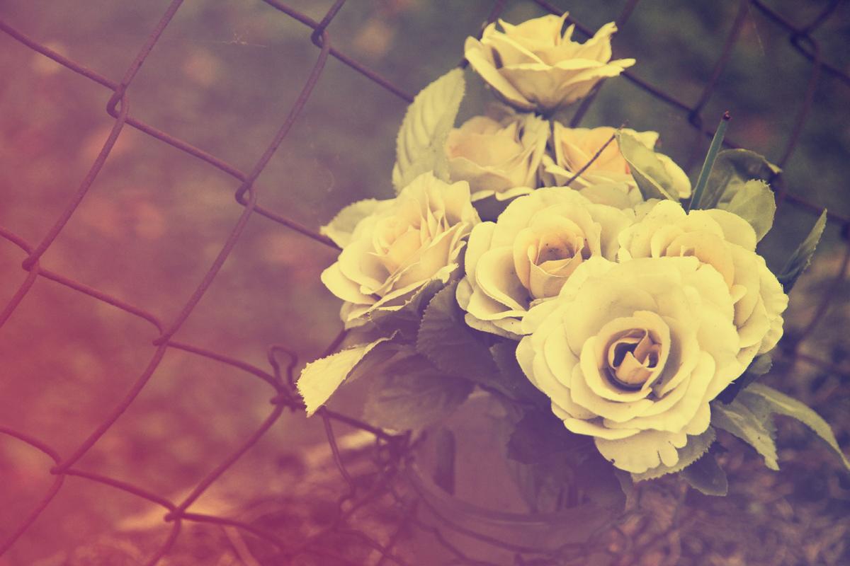 fiori-finti-rose-gialle-rete-cimitero