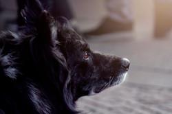 cane-muso-animaledomestico-ritratto
