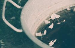 vasca-con-petali-di-fiore