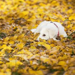 cane-bianco-servizio-fotografico-autunno-animale-domestico-foglie-gialle-secche