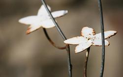 fiori-di-ferro-con-ruggine