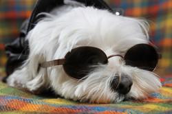 cane-bianco-servizio-fotografico-in-studio-occhiali-da-sole