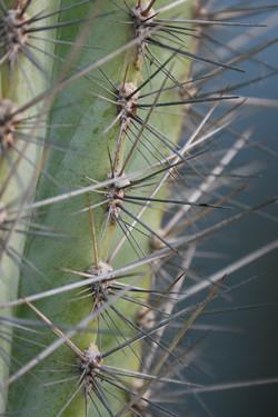 dettaglio-pianta-grassa-con-spine