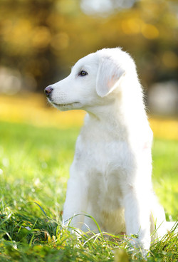 cane-bianco-servizio-fotografico-autunno-animale-domestico-ritratto
