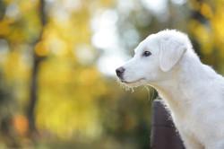 cane-bianco-servizio-fotografico-profilo-autunno-animale-domestico