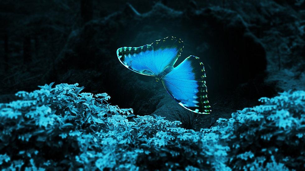 butterfly-4427384.jpg