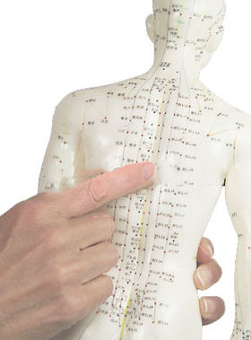 acupuncture dummy - rear view featuring back shu points