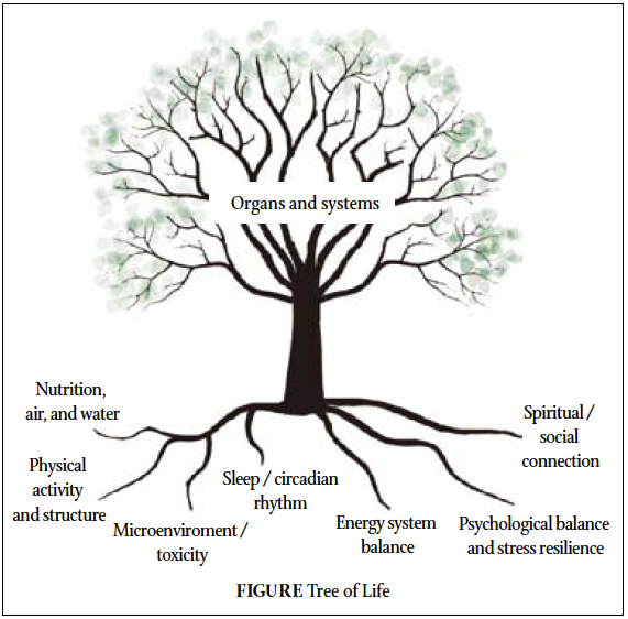 organs and systems are affected by lifestyle medicine approach