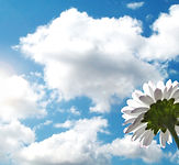 flower-sky-clouds-sunshine-mood-1085235-