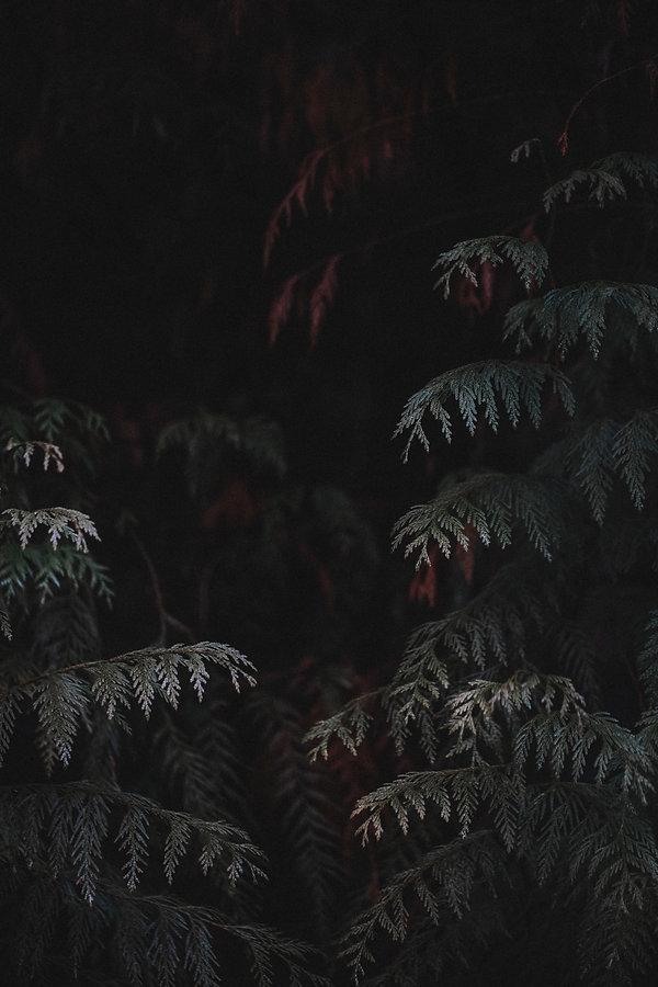 A canadian forest, Vancouver BC, by Juliebénardphotography