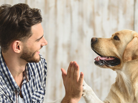 Five Things To Remember When Moving With Pets