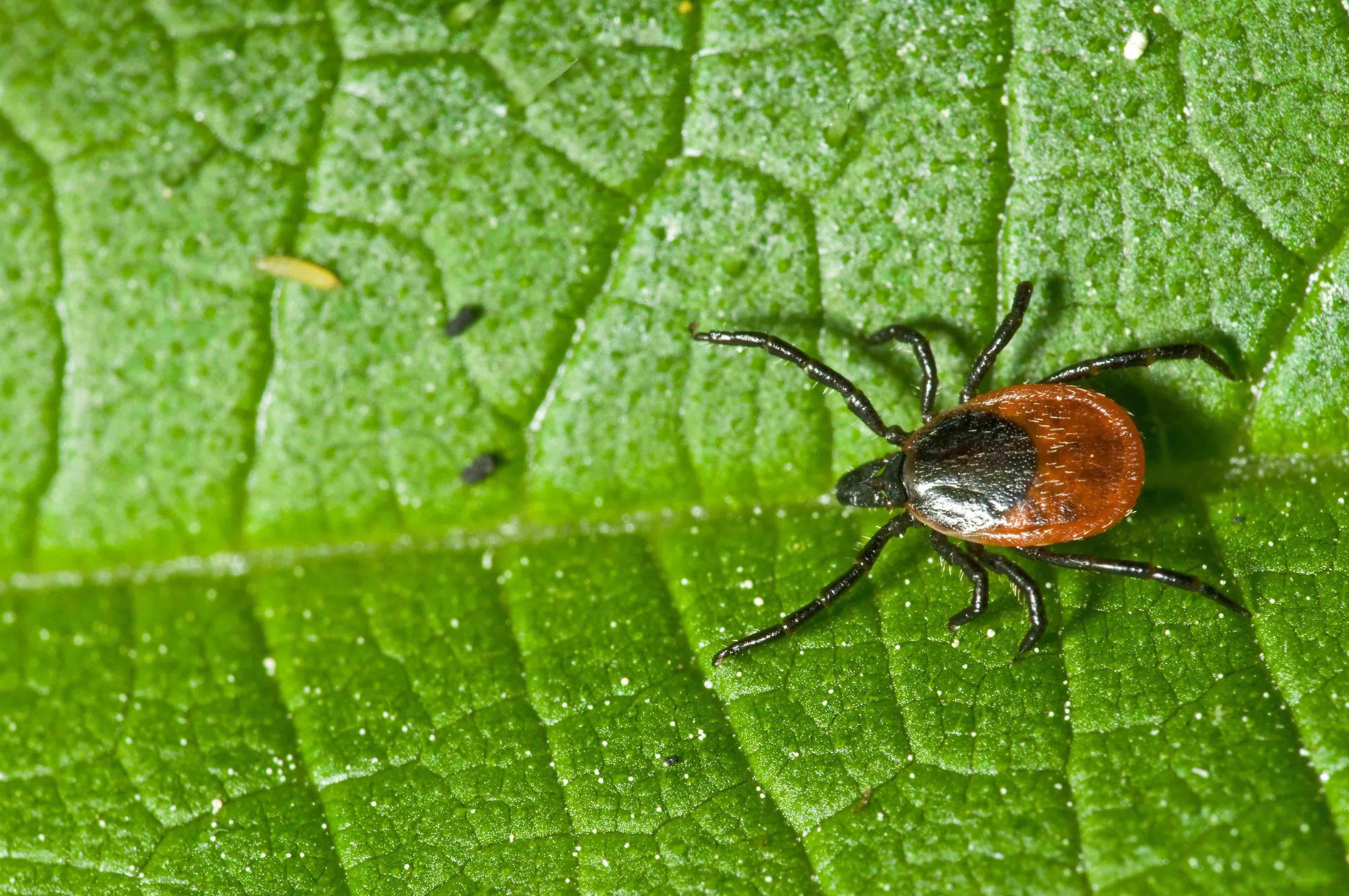 Lyme Disease Services