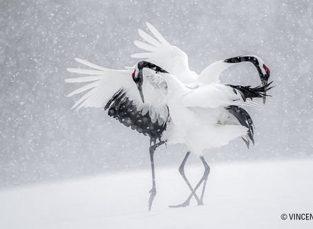 PHOT'ON : Vincent Munier
