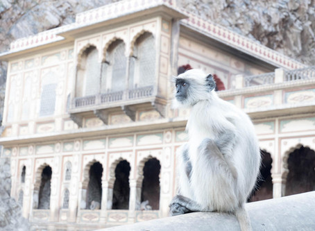 Les tribulations de Momiji, nouveau bestiaire en Inde