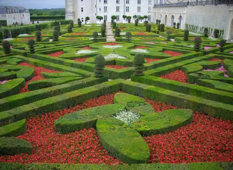 Cuando vamos a cortar una flor de tu jardin ?