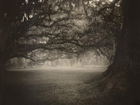 PHOT'ON : Sally Mann