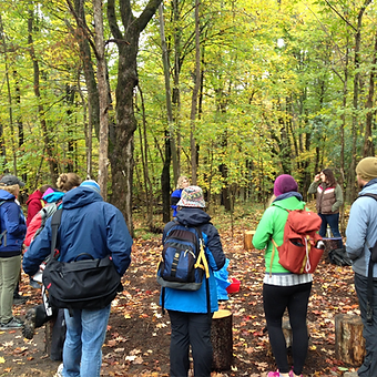 A group of adults listening to a guide in a forest.