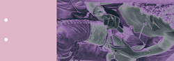 40-catalogo-HERIHERMAND-VIOLETA.jpg