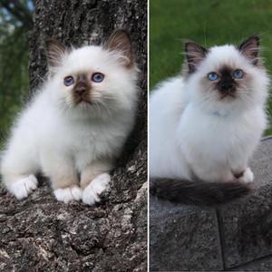 Mio født 2019 til venstre, og halvbror Maddox født 2020 til høyre