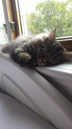 Timmy liker å sove i nærheten av slavene sine